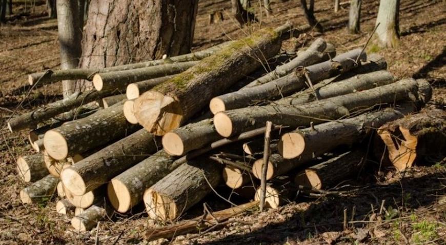33-godišnjak pokrao drva vrijedna više od 70 tisuća kuna