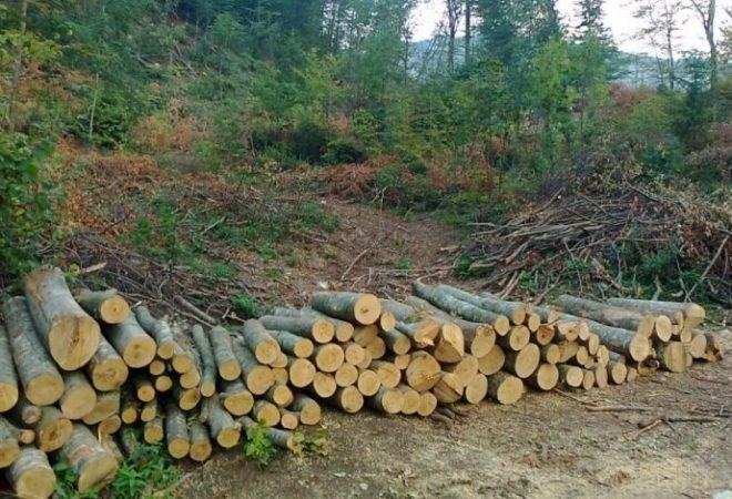 Iz šume na području Gline, trojica mladića ukrala devet stabala hrasta