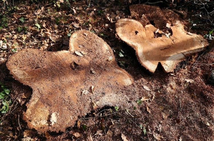 KRAĐA DRVA U MARTINSKOJ VESI – Vlasnik šume oštećen za oko 14 tisuća kuna