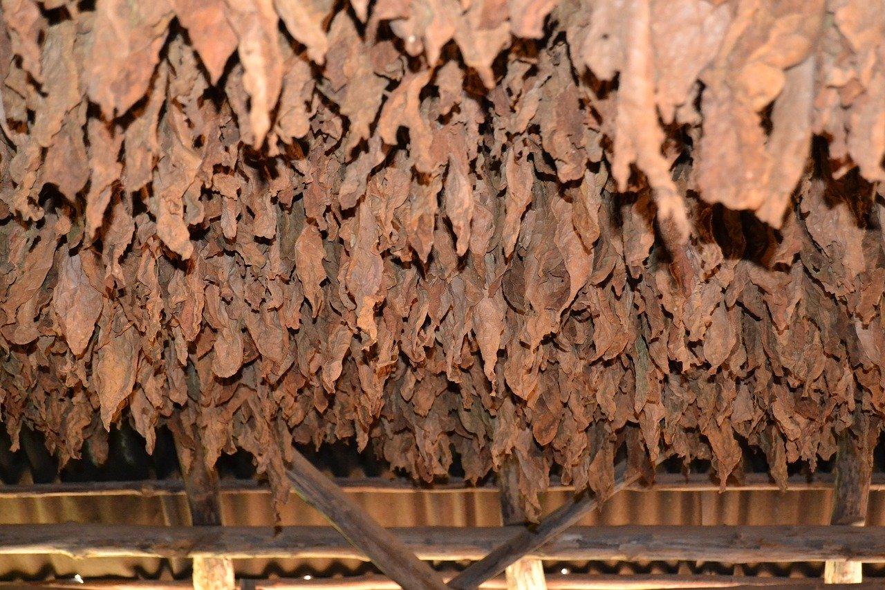 U Kutini zaplijenjeno preko 700 kilograma listova duhana