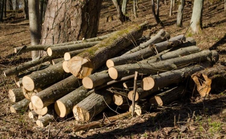 U Novom Selu otuđeno 57 stabala hrasta, graba i javora
