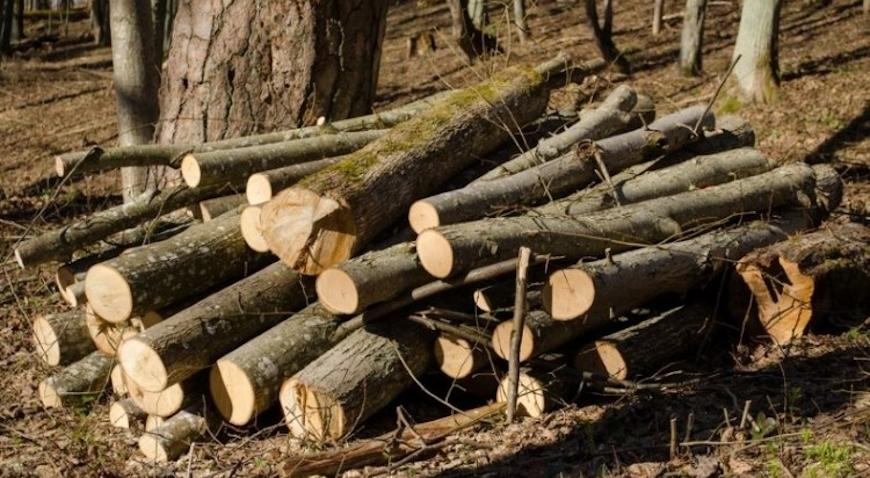 U šumi u Starom Farkašiću posjećeno 80 stabala graba i bukve