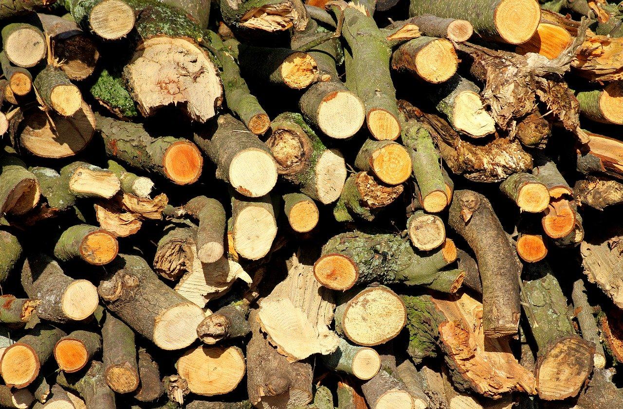 U šumi nedaleko Puske otuđili desetke raznolikih stabala